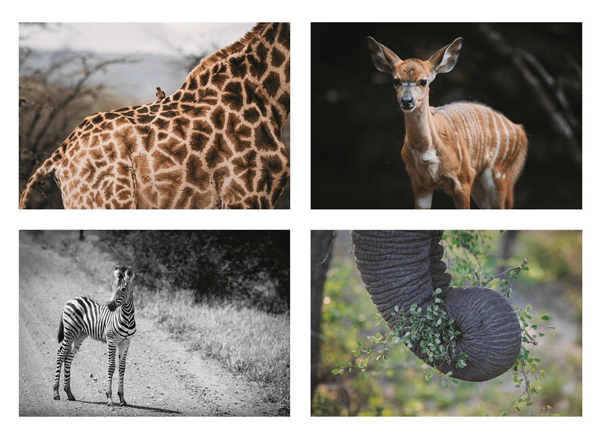 4 Images of African Wildlife by Brian Geissel
