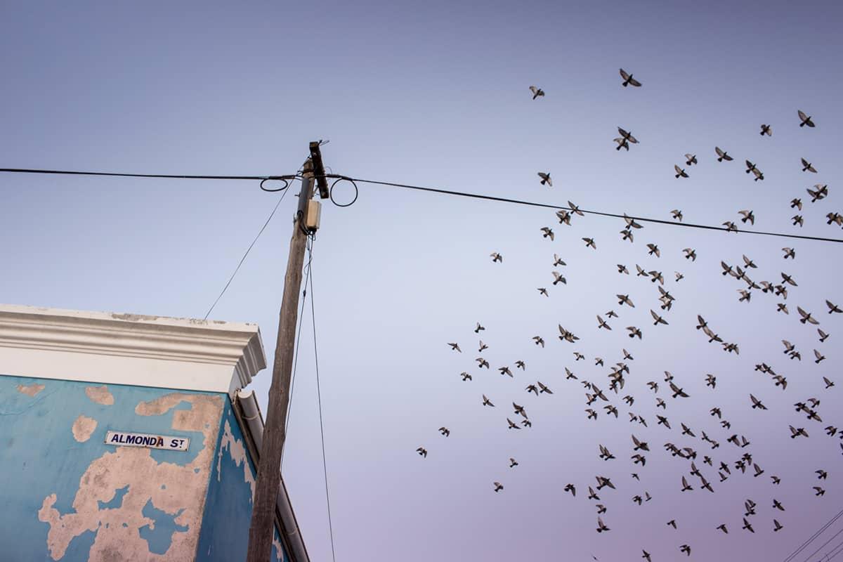 A flock of birds in the sky above Bo-Kaap by Sarah Isaacs