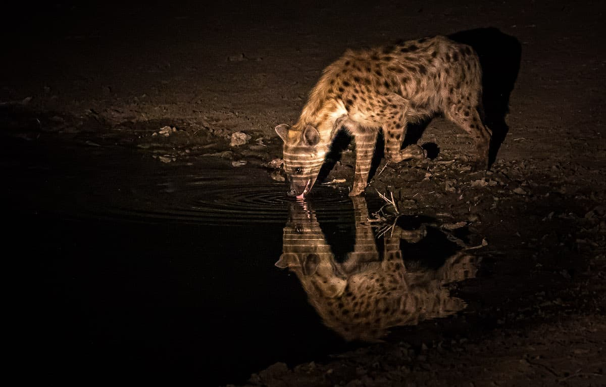 spotlighting during photo safaris