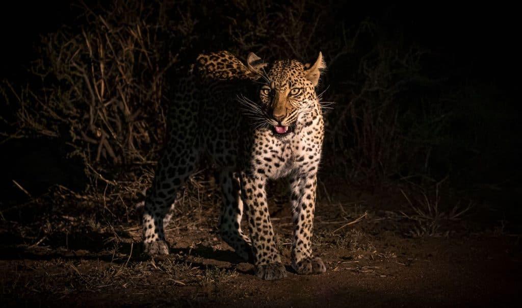 spotlighting during photo safaris