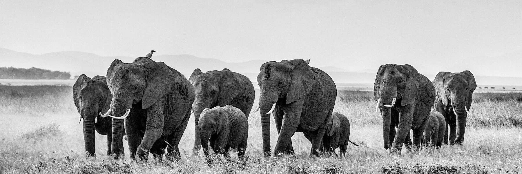 5 Powerful Conservation Photography Projects