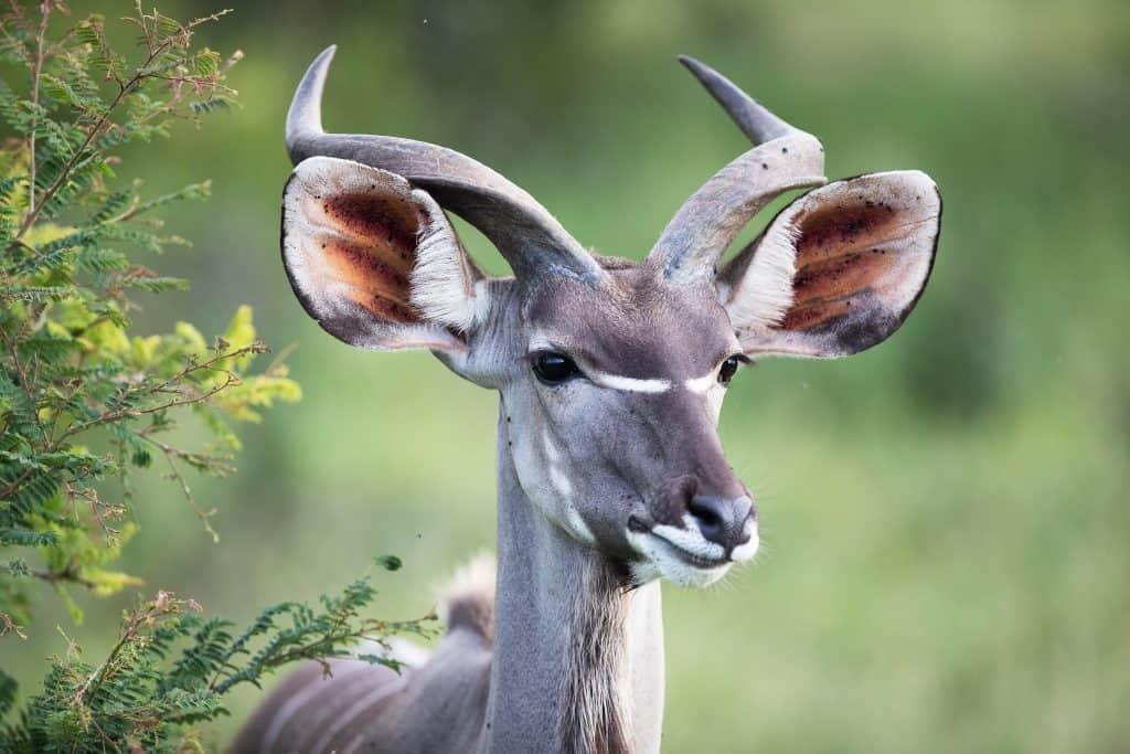 Wildlife Photography Internship Abroad