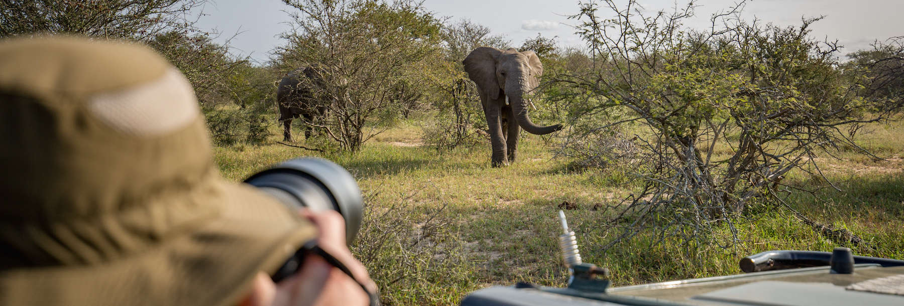 Why doing a wildlife photography internship abroad is a great idea