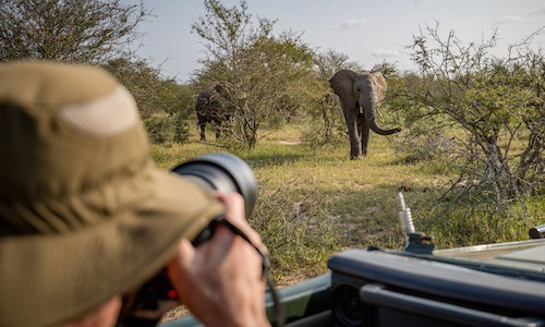 kruger photography volunteer photographing elephants FEATURE - Why doing a wildlife photography internship abroad is a great idea