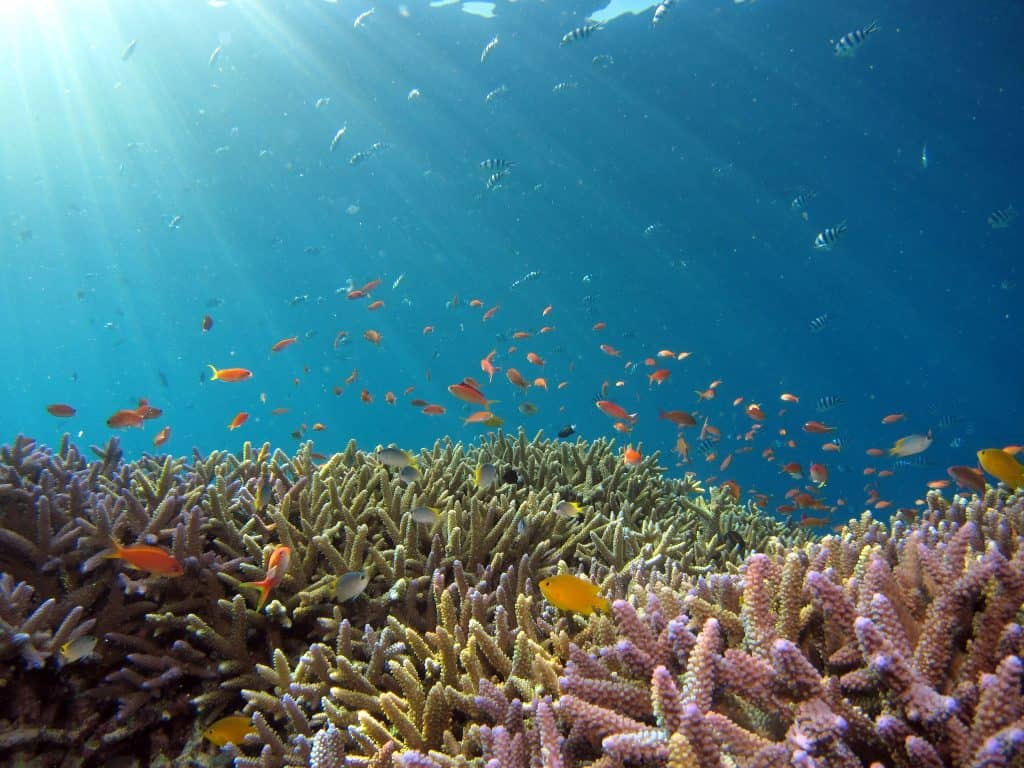 marine-conservation-photography-mozambique