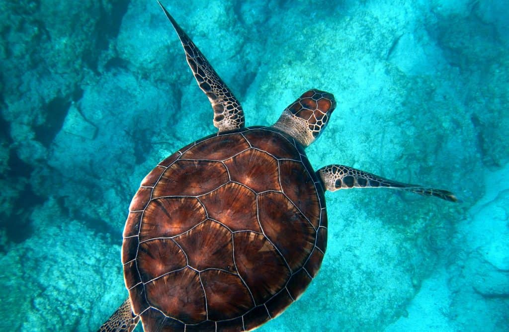 Randall Ruiz Turtle Mozambique 1024x668 - 5 Reasons To Join Our Marine Photography Project in Mozambique